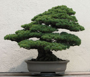 image The Omiya Bonsai Art Museum
